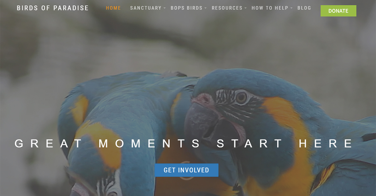 Welcome to Birds of Paradise Sanctuary